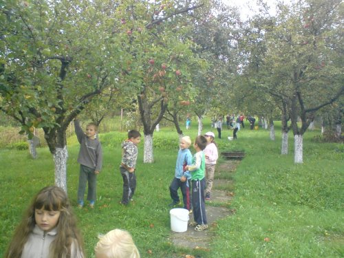Sběr jablek :-)